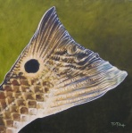 Redfish Tail Study
