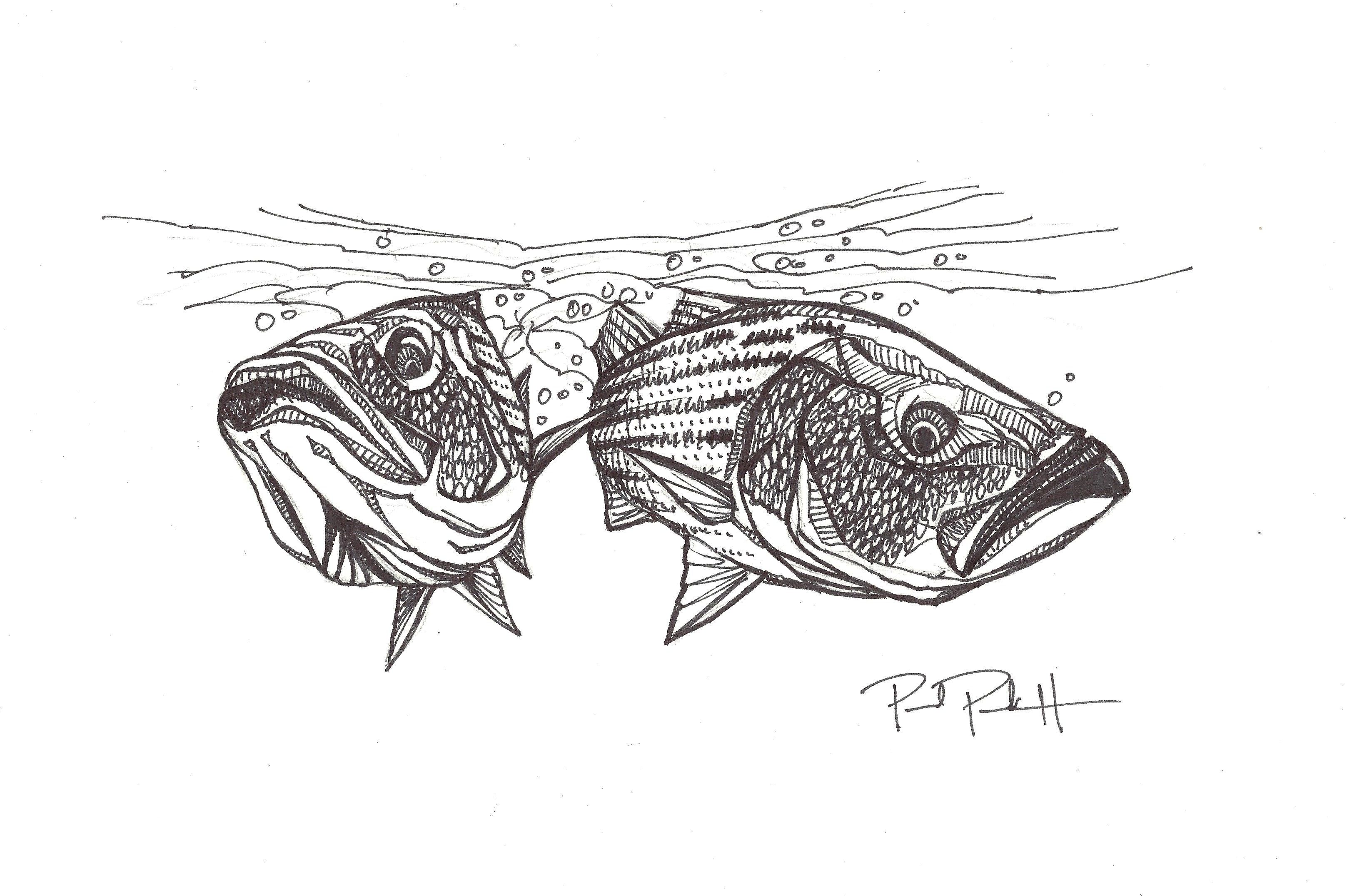 Redfish Drawing Outline  Related ImagesRedfish Drawing